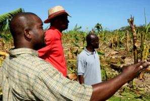 Agriculture-Jamaica