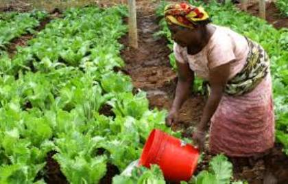 Carib agricul