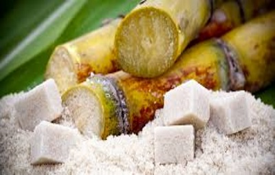 sugar canee