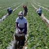 Farm work programme